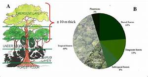 Tropical Rainforest Proportion And Its Forest Canopy Structure  Layers