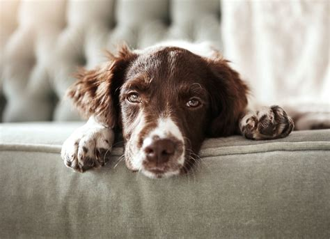 how to remove dog hair from sofa how to get rid of pet hair bob vila