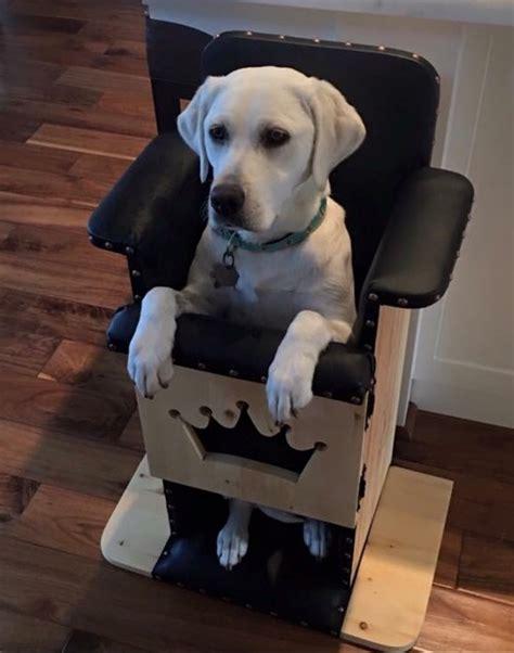 Bailey Chair Megaesophagus Uk by New Help For Dogs With Megaesophagus Spot Speaks