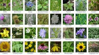 bulk flowers online food and foraging survivalist self reliance