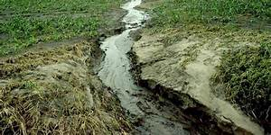 New System Could Remove 2 Water Pollutants from Ag Fields ...