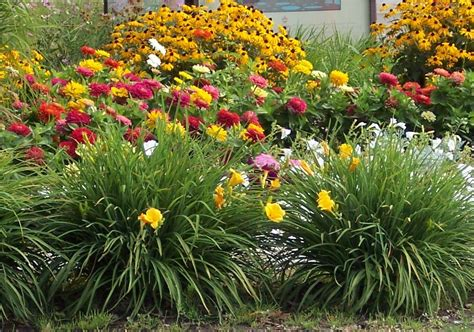 drought tolerant shrubs water wisely for a beautiful garden and landscape