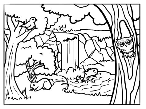 forest coloring pages  coloring pages  kids