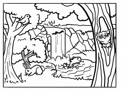 Forest Coloring Pages Animals Sheets Background Printable