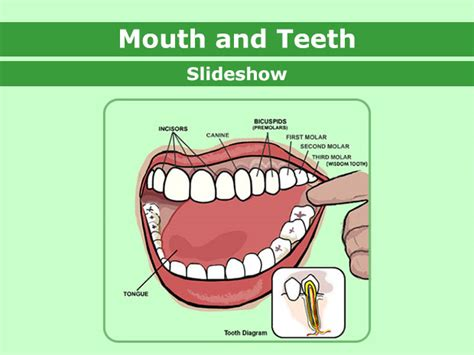 putting objects  mouth clipart clipground