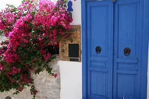 19 best images about Bougainvillea on Pinterest   Trees ...