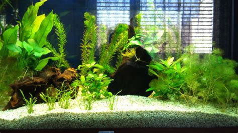 poissons aquarium eau douce 50l