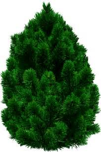 Transparent Pine Tree