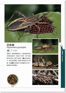 U9999 U6e2f U6606 U87f2 U5b78 U6703 Hong Kong Entomological Society