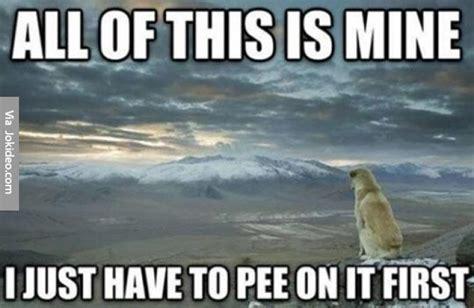 Mine Meme - all of this is mine dog meme