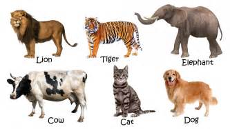 picture  domestic animals  names hd wallpapers