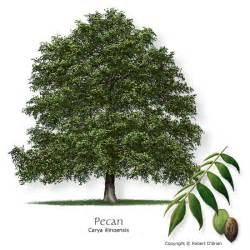 tree selector tree description