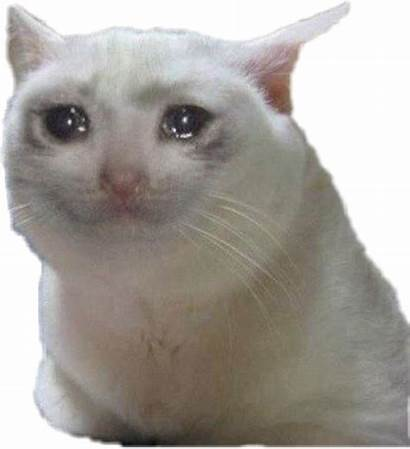 Sad Meme Cat Sadcat Sticker Memes Transparent
