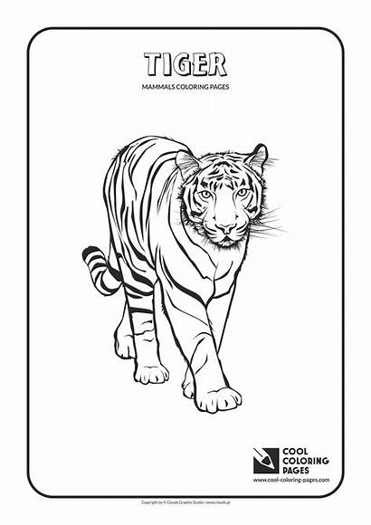 Coloring Cool Pages Tiger Mammals Animals Camel