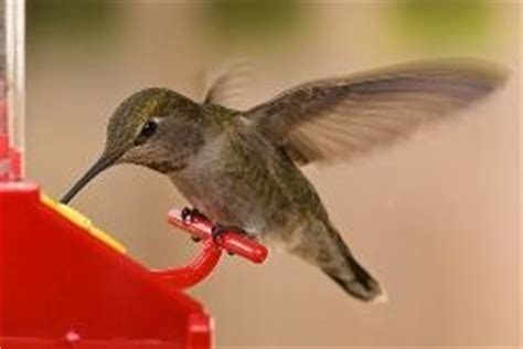 what is the only bird that can fly backwards the only birds that can fly backwards keep your chin up hummingbirds