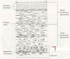 integument lecture exam With basement wiringbasementwiring2jpg images frompo