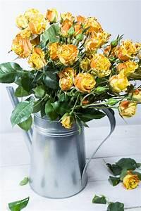 Schnittblumen Länger Frisch : schnittblumen l nger frisch halten erfahren sie mehr blog ~ Watch28wear.com Haus und Dekorationen