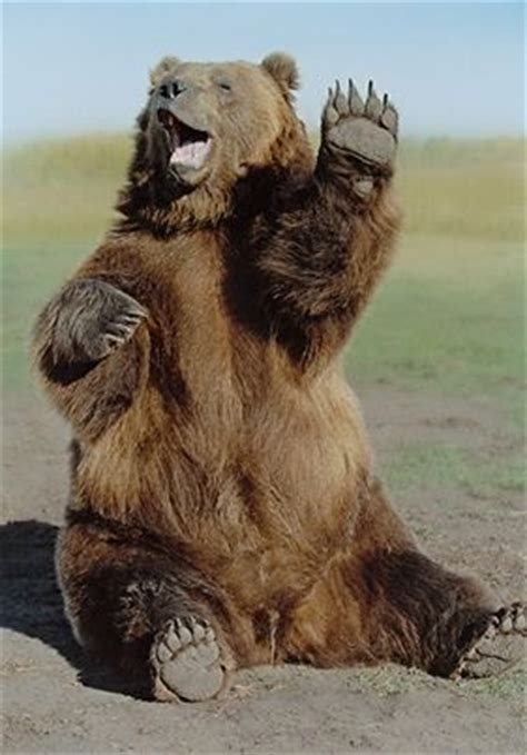 waving bear animals beautiful bear pictures animals wild