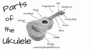 Play Ukulele Now  Anatomy Of The Uke  Parts Of The Ukulele