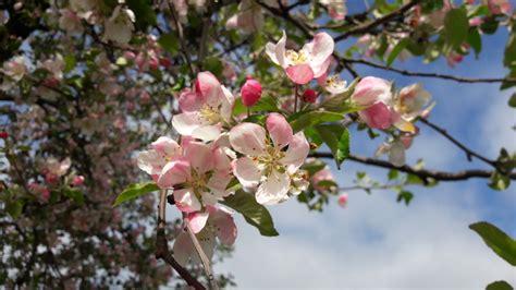 Pavasaris dabā, pavasaris galvā! - Salaspils tūrisma portāls