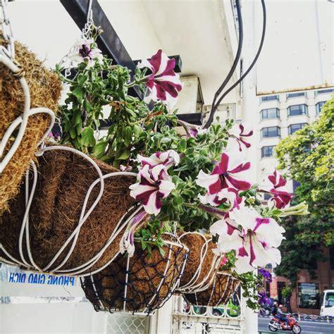 รูปภาพ : กระถางดอกไม้, ปลูก, การออกแบบดอกไม้, เหล็ก, ฤดูใบไม้ผลิ, จัดดอกไม้, ระเบียง, พืชสมุนไพร ...