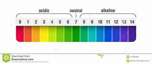 Ph Value Scale Chart Stock Vector  Illustration Of Chart