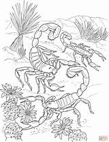 Desert Coloring Pages Scorpion Printable sketch template