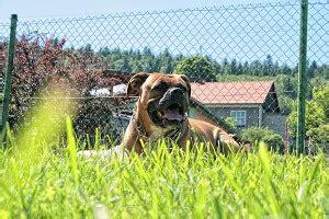 Zaun Hundesicher Machen by Den Garten Hundesicher Machen Hundetraumland De