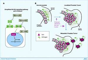 Therapeutic Targeting of the Hedgehog-GLI Pathway in ...