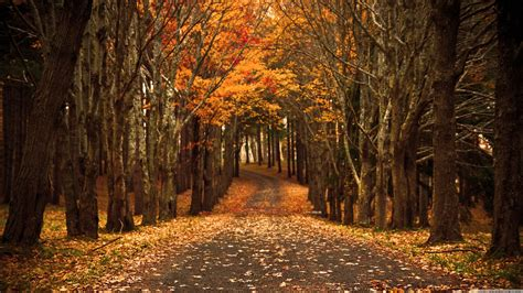 Autumn Wallpapers 4k by Ultra Hd Autumn Wallpapers Top Free Ultra Hd Autumn
