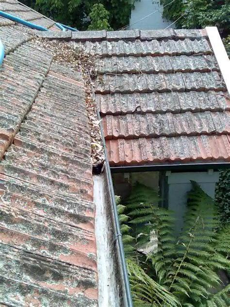 vac da gutter services padstow heights nsw  reviews