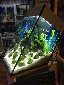 Very Interesting Aquarium