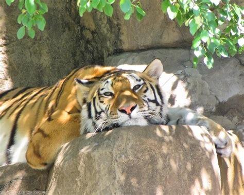 zoos animals wudc info
