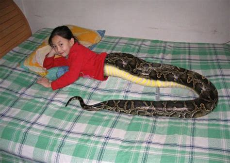 Wanita Hamil 11 Bayi Thailand Snakegirl Attracts Crowds Of Pilgrims And Tourists
