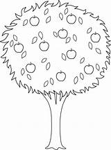 Tree Apple Coloring Clipart Outline Drawing Clip Trees Line Orange Pages Colorable Transparent Getdrawings Cliparts Nature Sheet Printable Library Buds sketch template