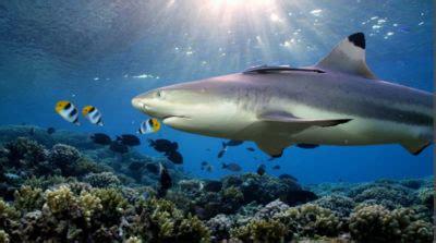 sharks   coral canyon film kslofliving oceans