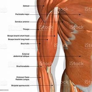 31 Diagram Of Knee Muscles