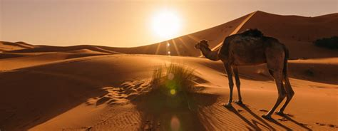 10 Interesting Facts About the Sahara Desert - On The Go ...