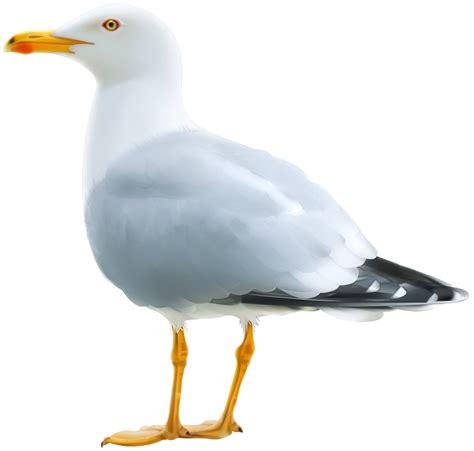 Seagull Clipart Sea Bird Clipart Seagull Pencil And In Color Sea Bird