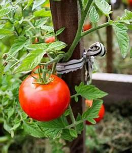 Tomaten Im Hochbeet : hochbeet bauanleitung hochbeet selber machen gartengestaltung herbst ~ Whattoseeinmadrid.com Haus und Dekorationen
