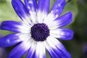 macro flower photography blue Gallery