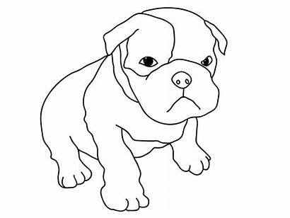 Coloring Pitbull Puppy Pages Dog Boxer Pug
