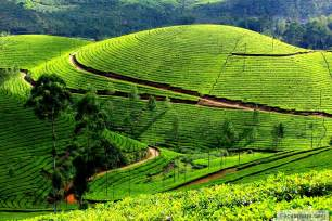 ooty places to visit best time to visit ooty