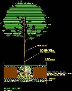 Tree Plantation Detail 2D DWG Detail for AutoCAD • Designs CAD