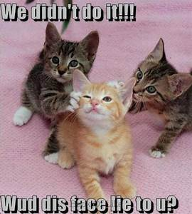 """We didn't do it!!! Wud dis face lie to u?"" Cute kitty ..."