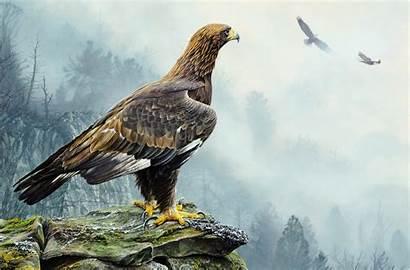 Eagle Golden Hunt Flight Tree Nature Alan