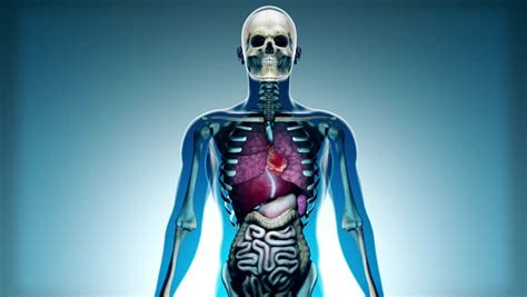 4k Sick Internal Organs And Skeleton In A Transparent