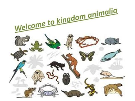 kingdom animalia authorstream
