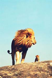 baby lion on Tumblr