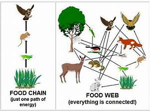 What Is The Food Web